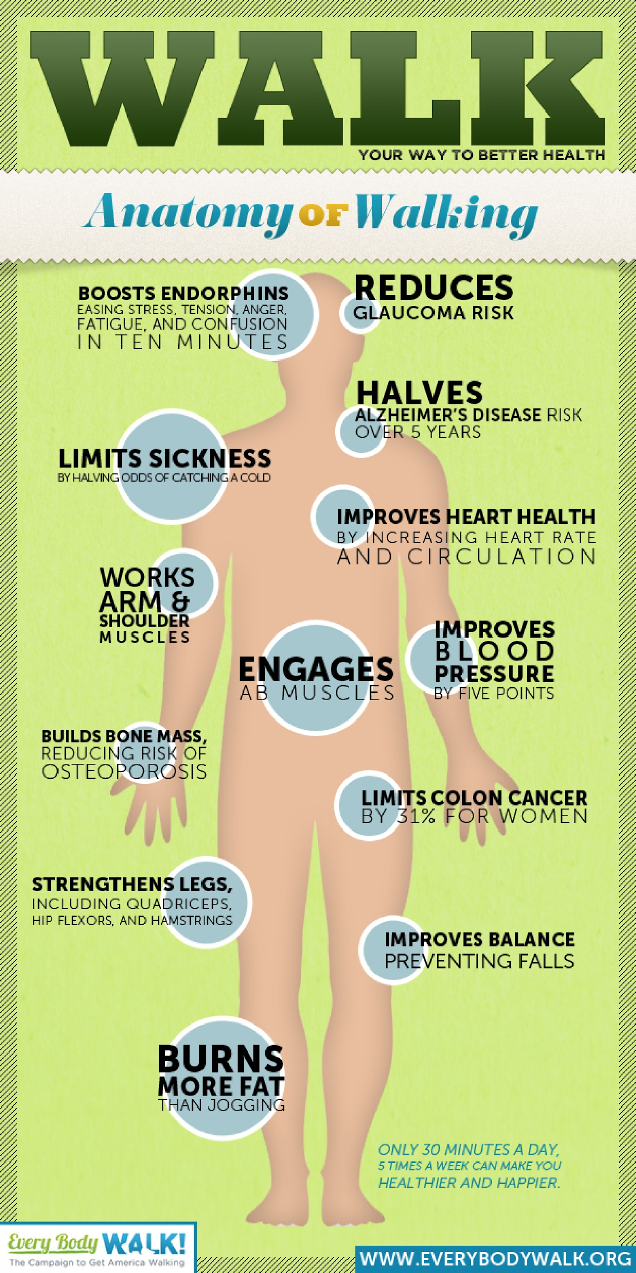 Anatomy of Walking