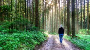 Therapeutic Walk in Nature